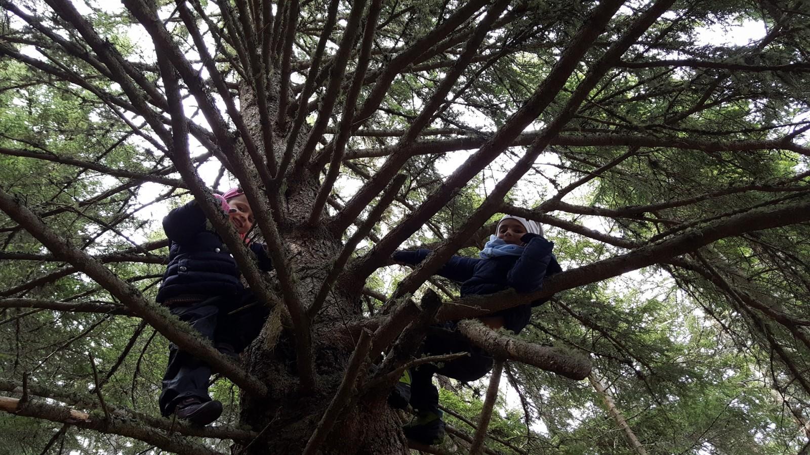 Auf einen Baum klettern