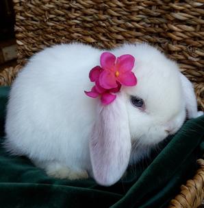 Kuscheliges Kaninchen - ganz in weiß