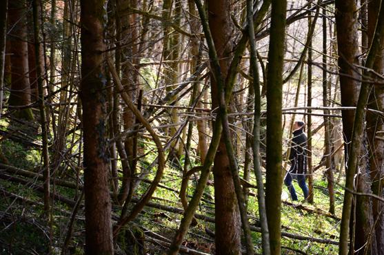 Bärlauch und Frühlingsblumen färben den Waldboden grün