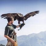 Falkner bei der Greifvogelschau