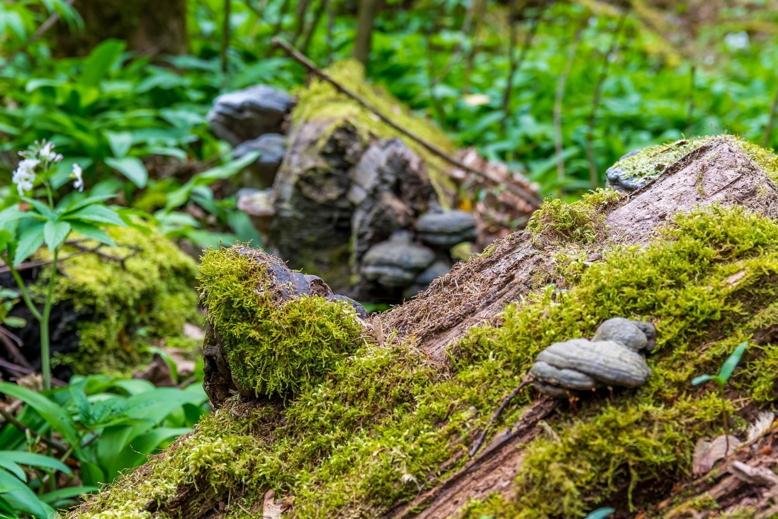 Heilsam: die Natur am Dürrnberg.