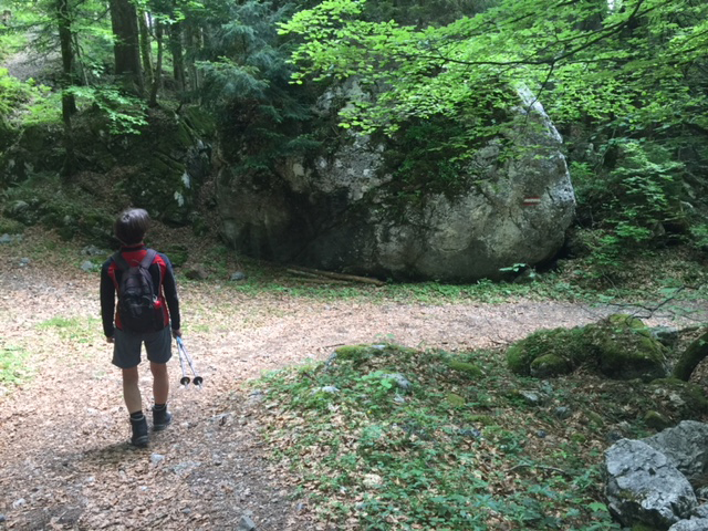 Wege durch den Wald