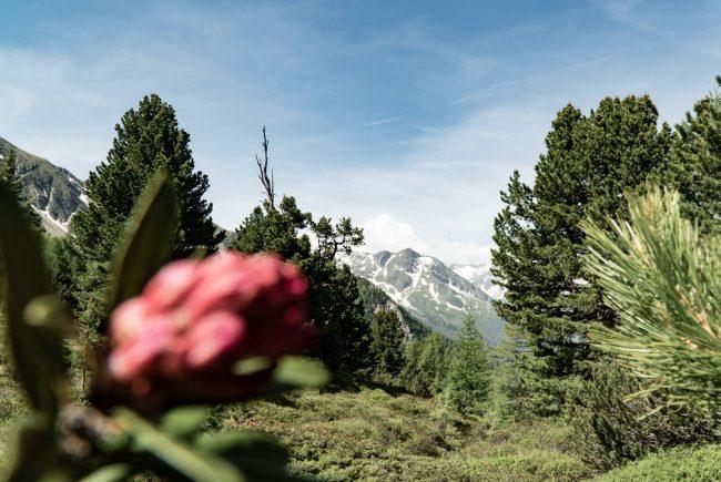 Blick in die Hohen Tauern vom Graukogel aus