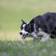 Hundehotel Grimming Bildergalerie
