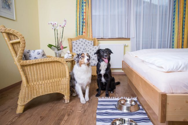 Hundehotel Grimming Zimmer