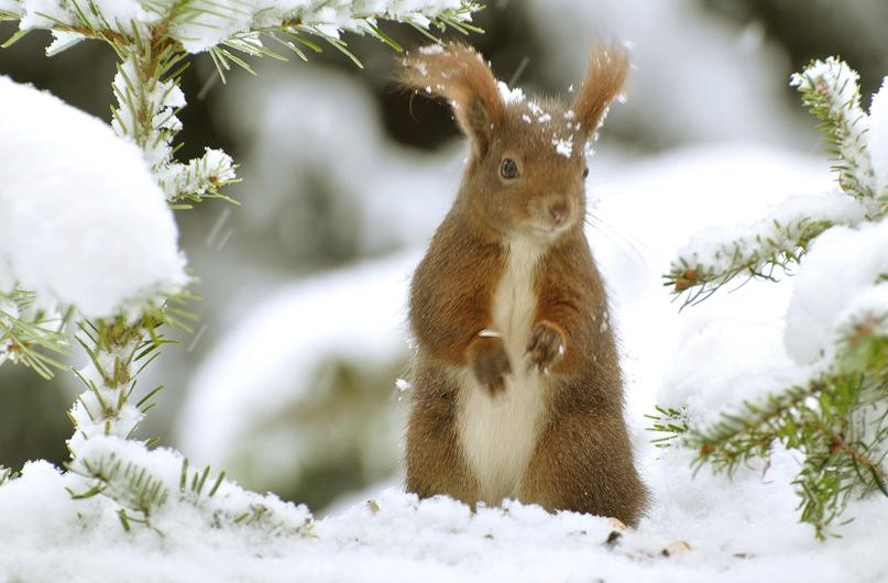 Eichhörnchen und ...