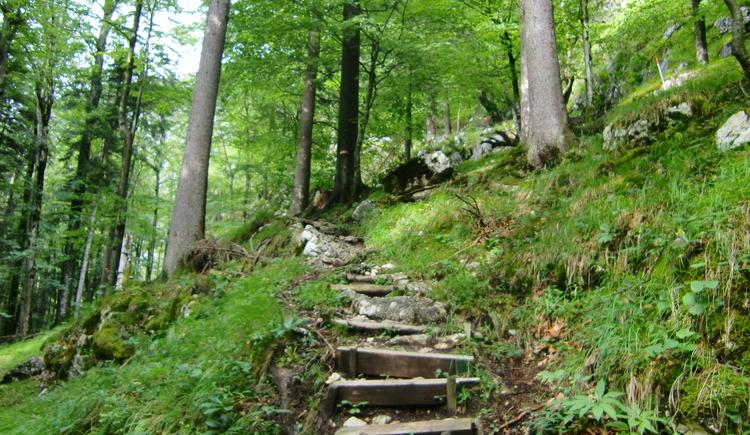 Wanderweg eingebettet in die Natur