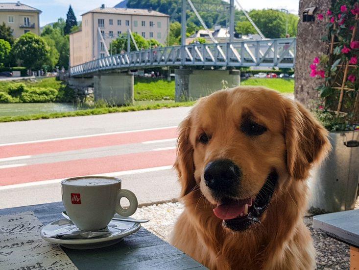 hundefreundliche Kaffeehäuser im SalzburgerLand