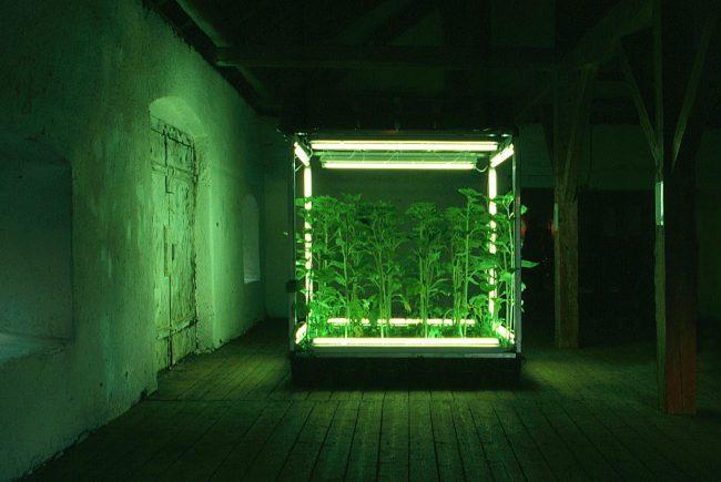 Installation mit Plfanzen und künstlichem Licht