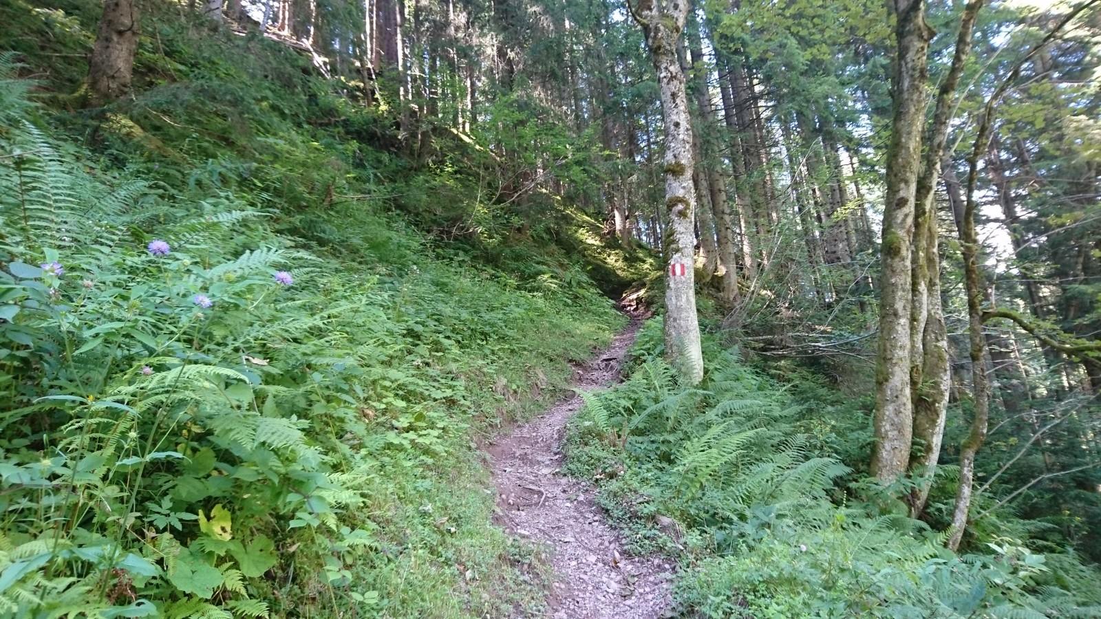 Waldwanderweg zu den Grießener Almen