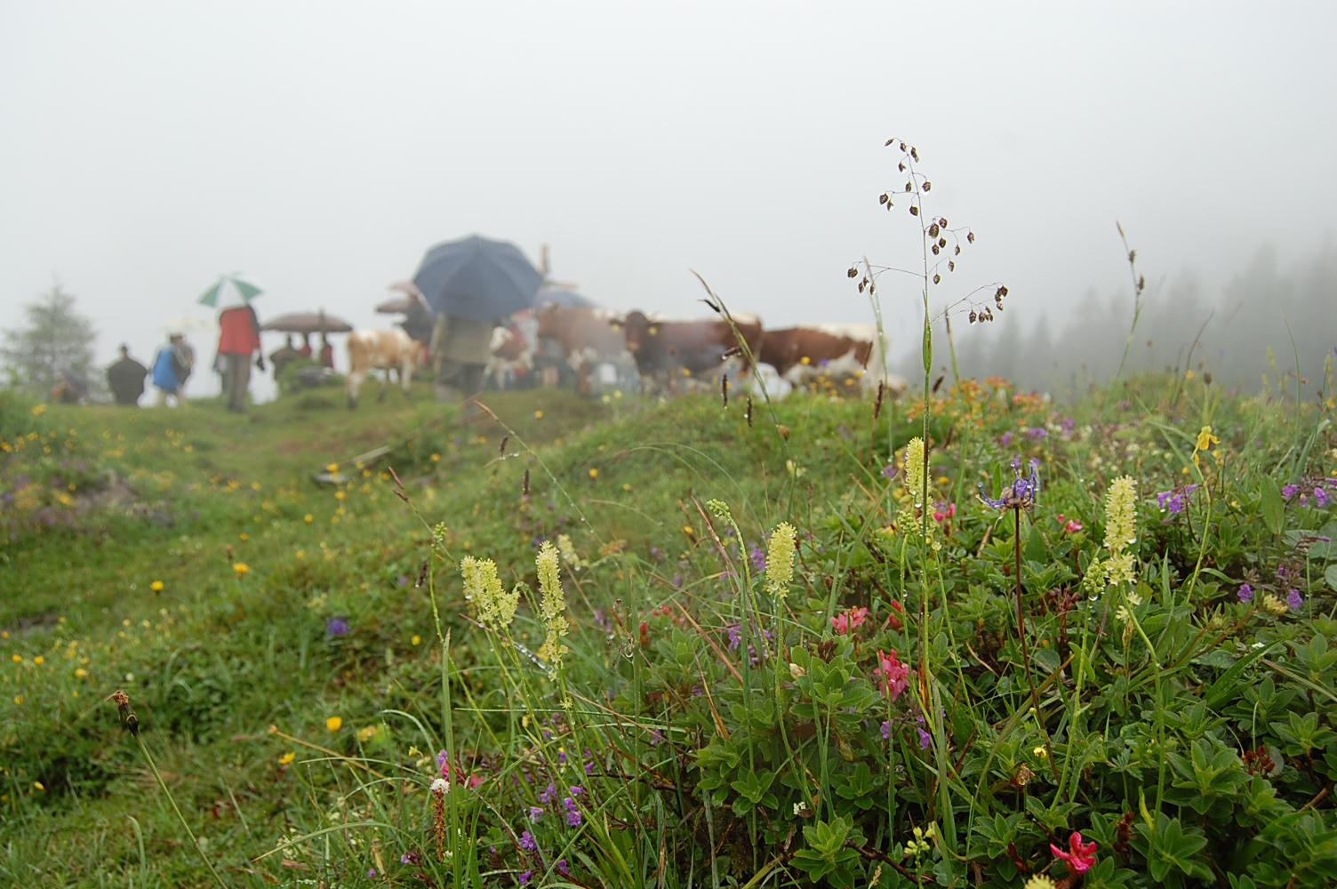 Rocheralm im Sommerregen
