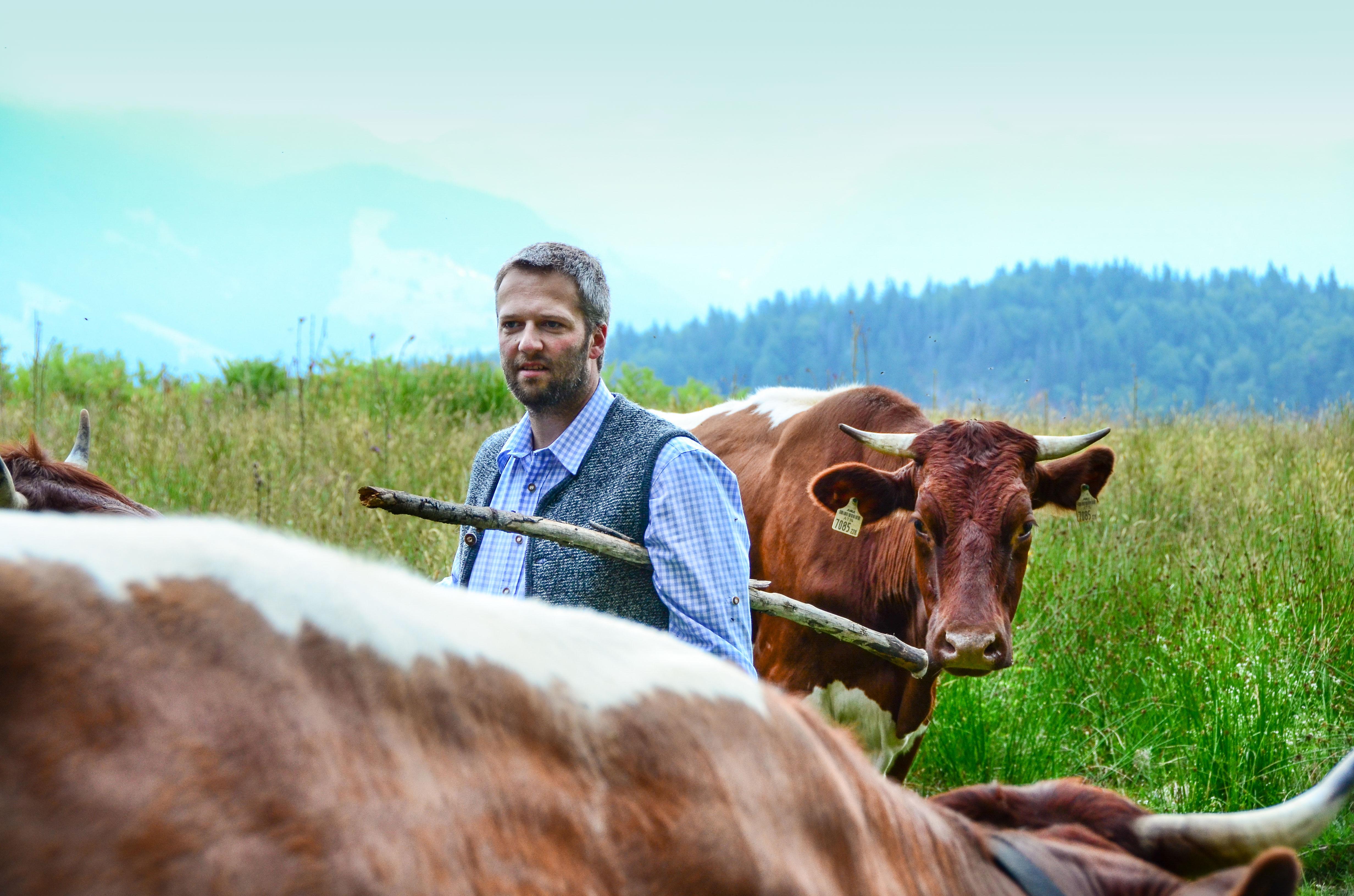 Rocherbauer Josef Quehenberger mit Pinzgauer Rinder
