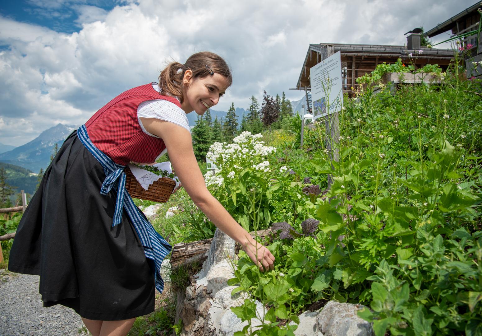 Frische Zutaten für die Kräuterprodukte. c Edith Danzer