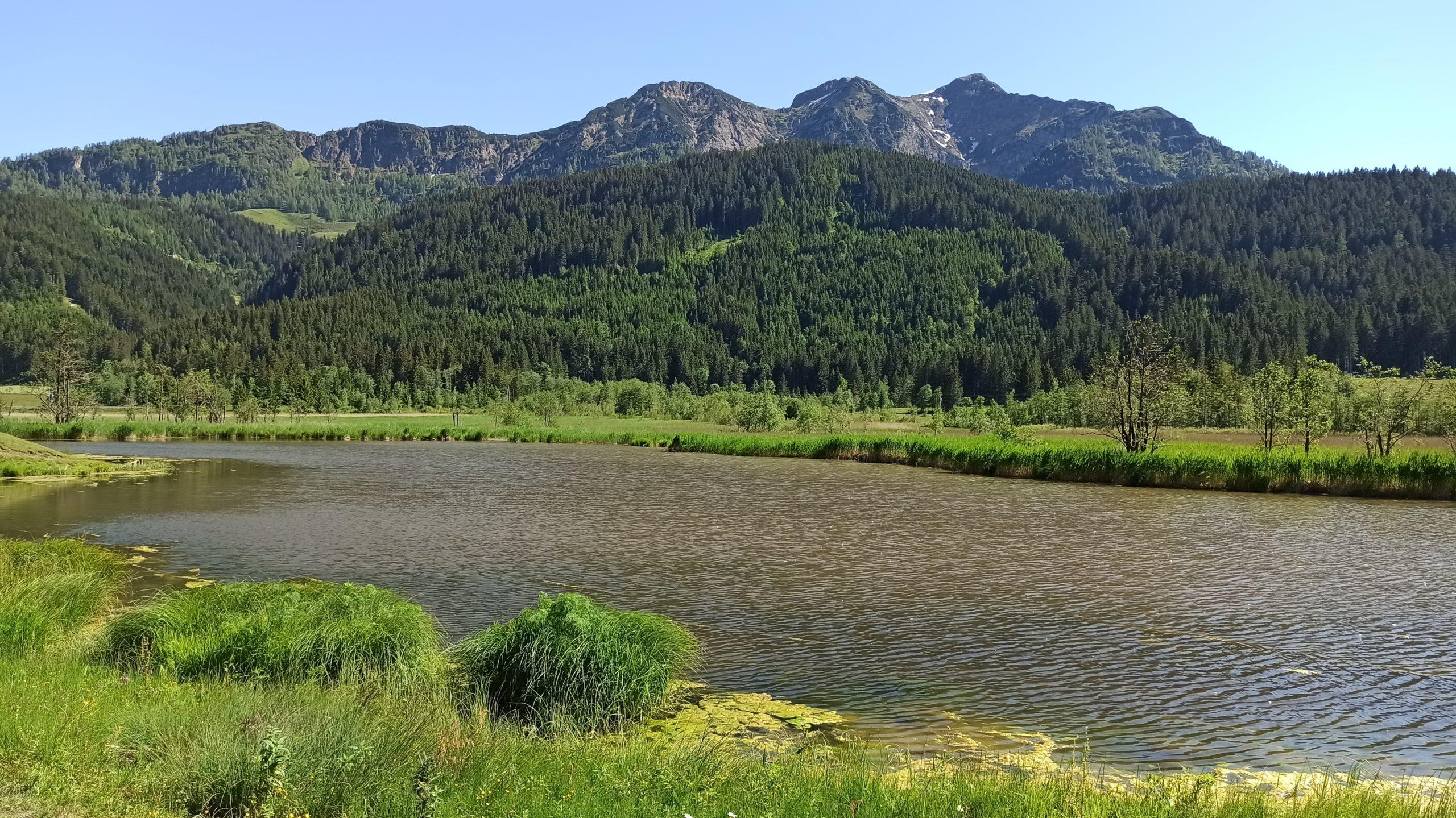 Der ruhige Grießensee vom Radweg aus betrachtet
