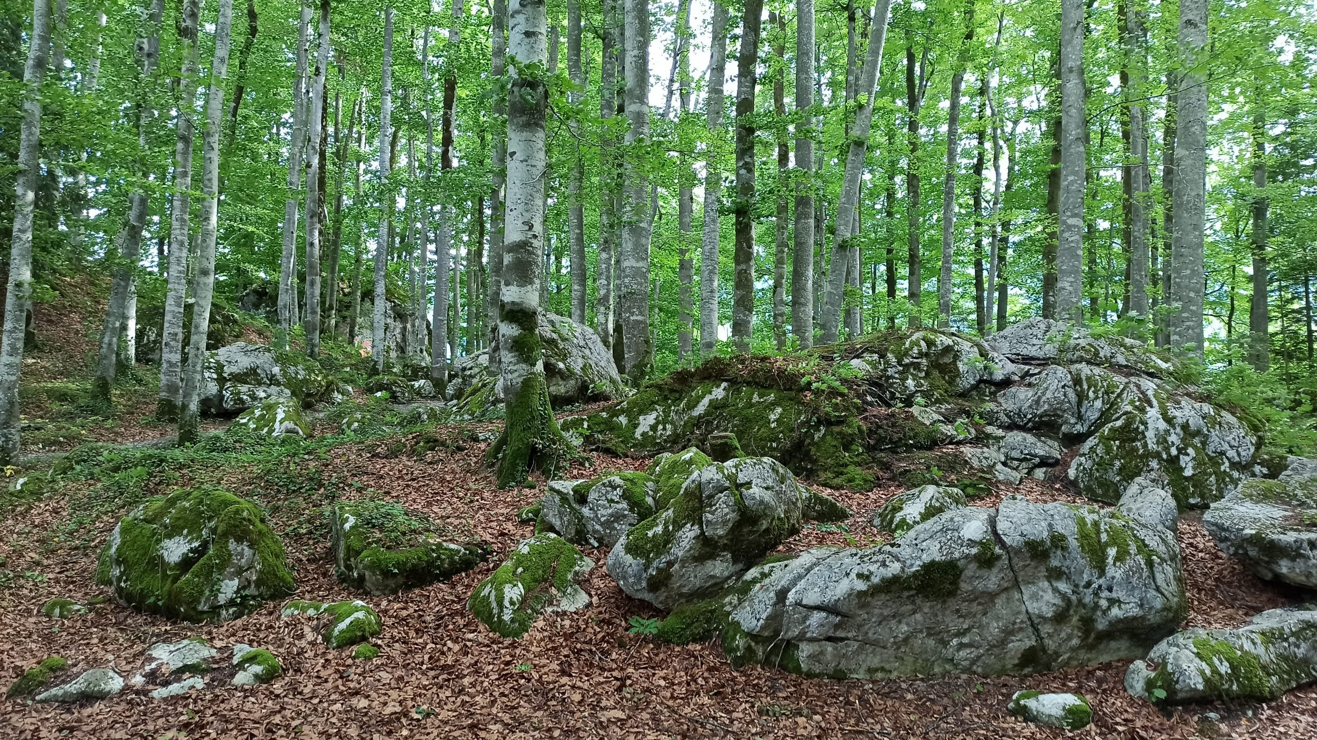 Im Bairaupark tankt man herrlich frische Luft, an heißen Tagen erfrischt man sich zudem am kleinen Quellwasserbrunnen