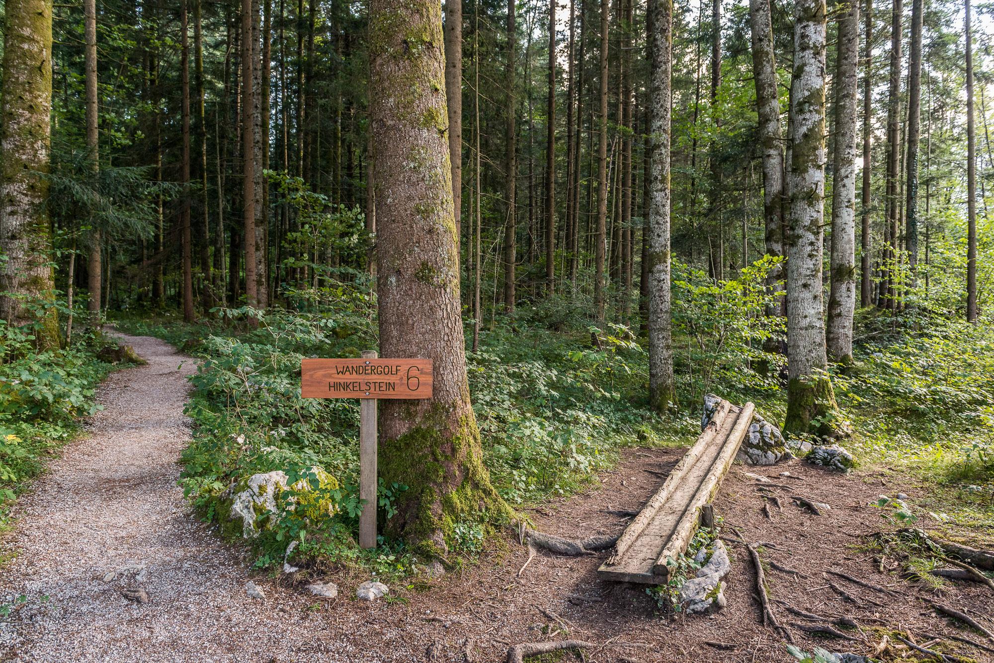Die herrliche Waldluft begünstigt unser Geschick beim Wandergolf