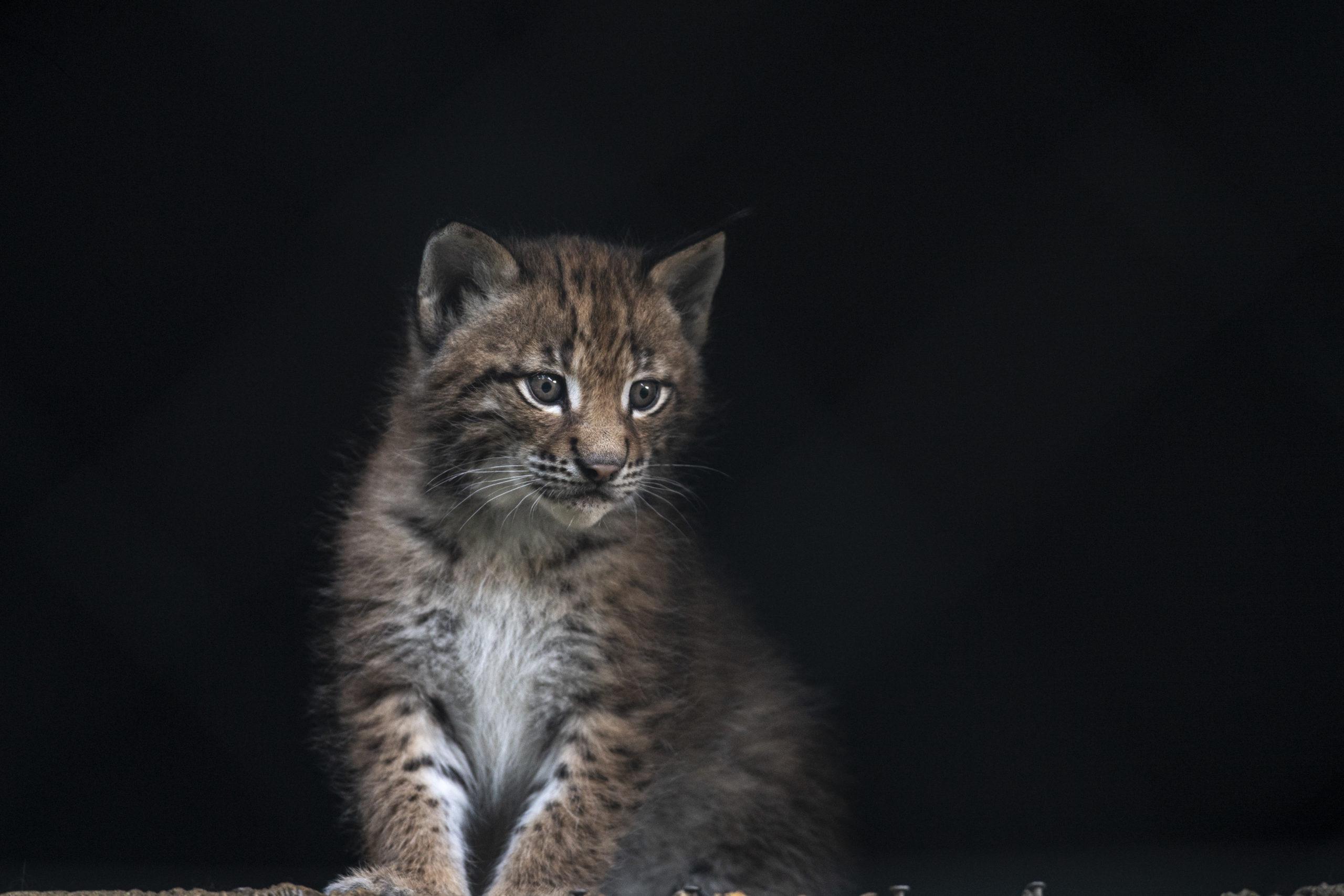 c Daniel Schwab - Naturfotografie Katzluchs.