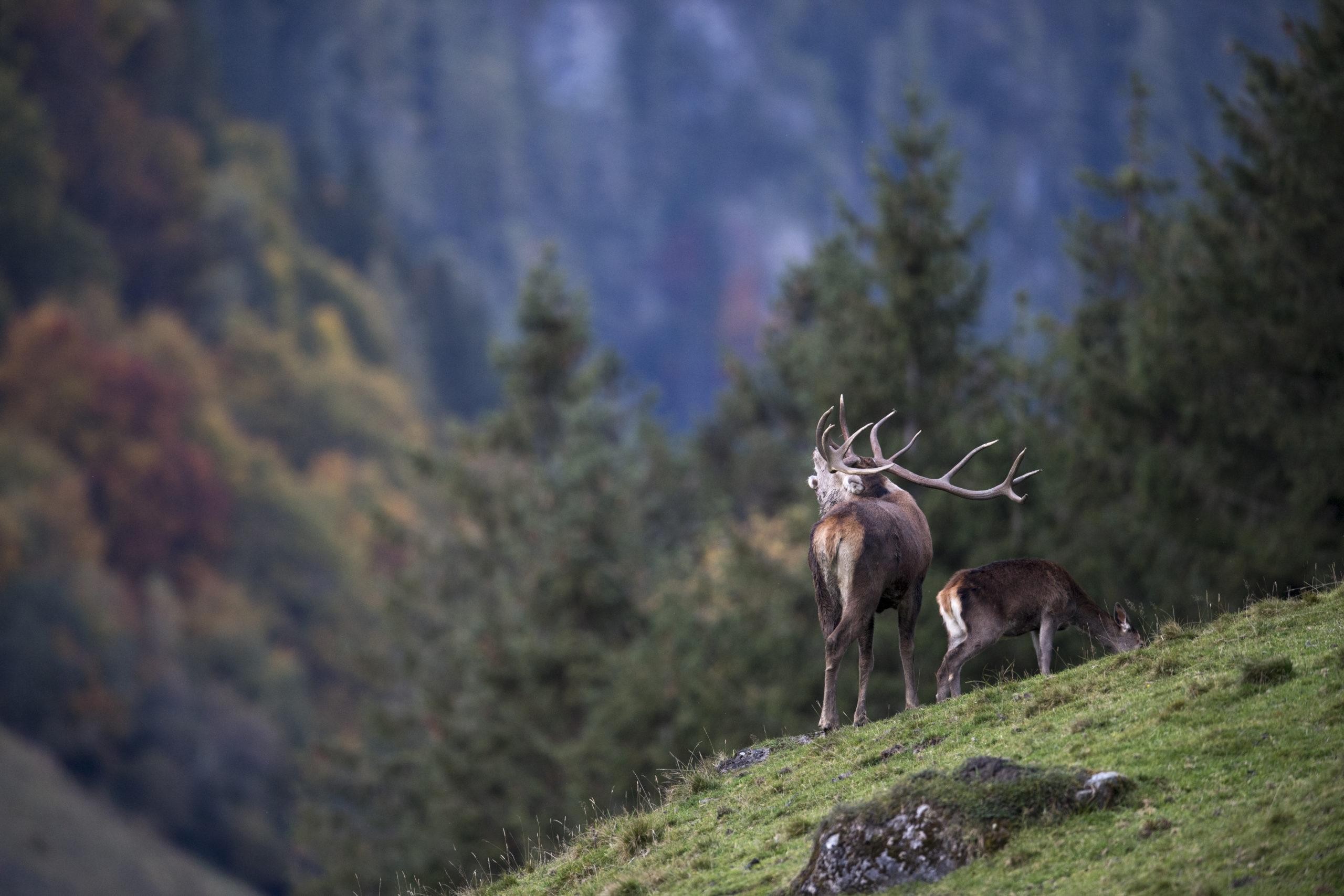 c Daniel Schwab - Naturfotografie Im Hirschgehege