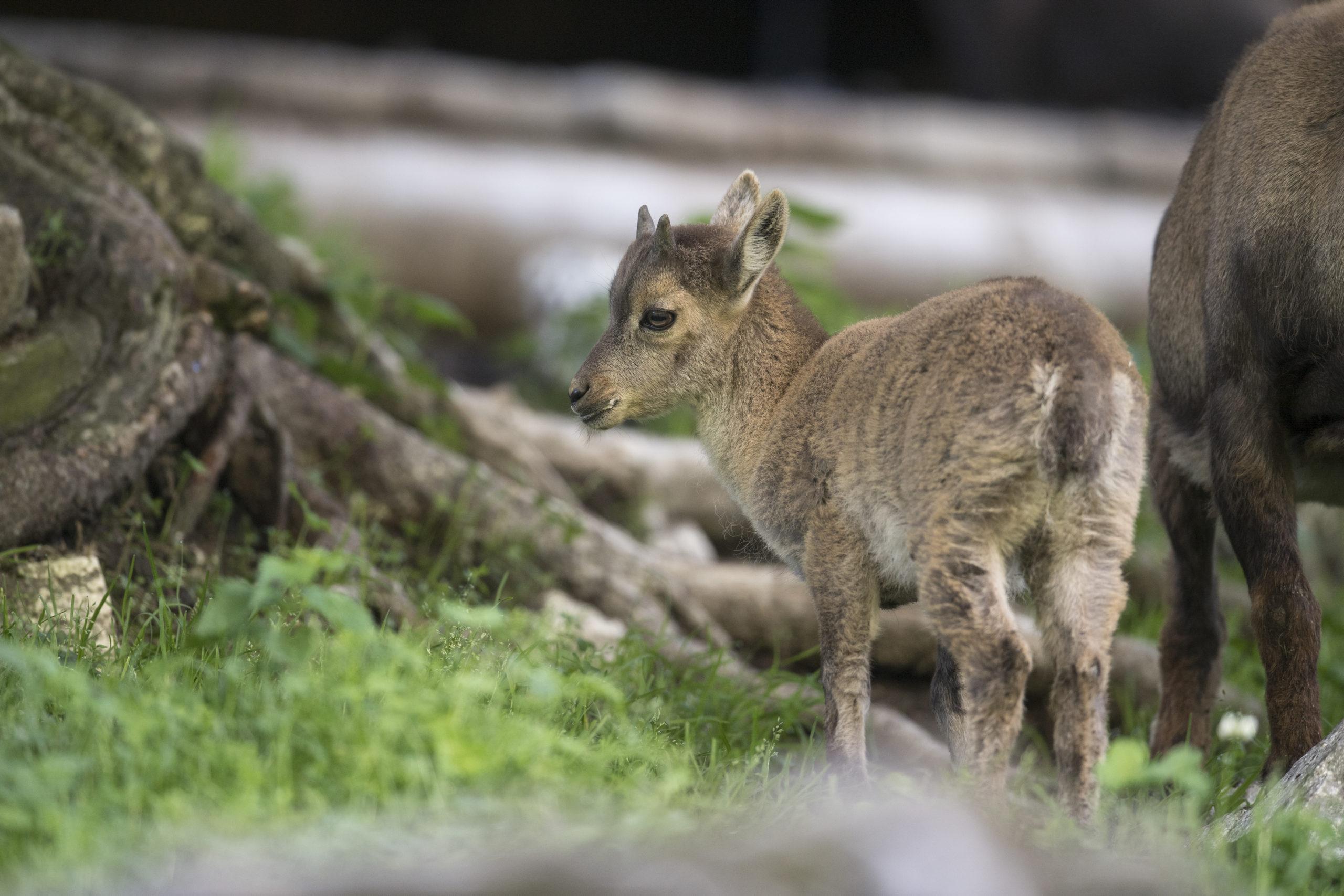 c Daniel Schwab - Naturfotografie Nachwuchs im Wildpark