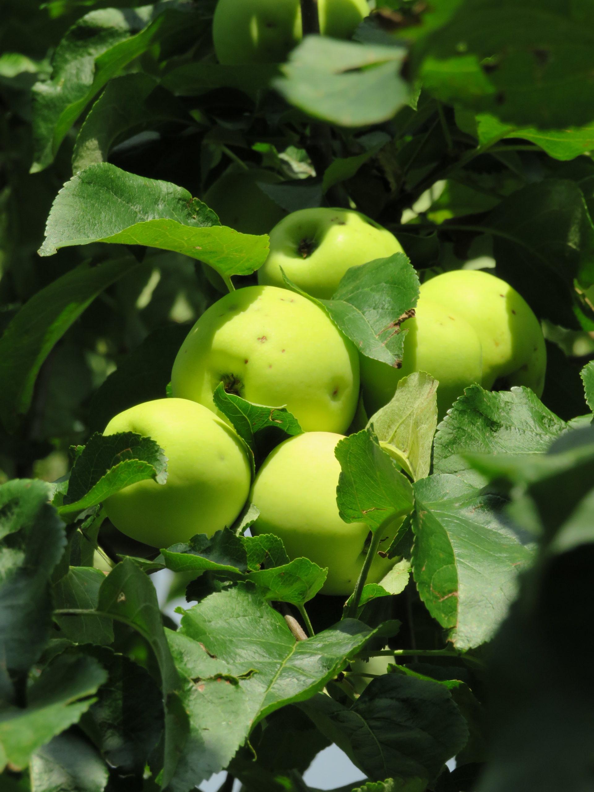 ... bis hin zum knackigen Apfel
