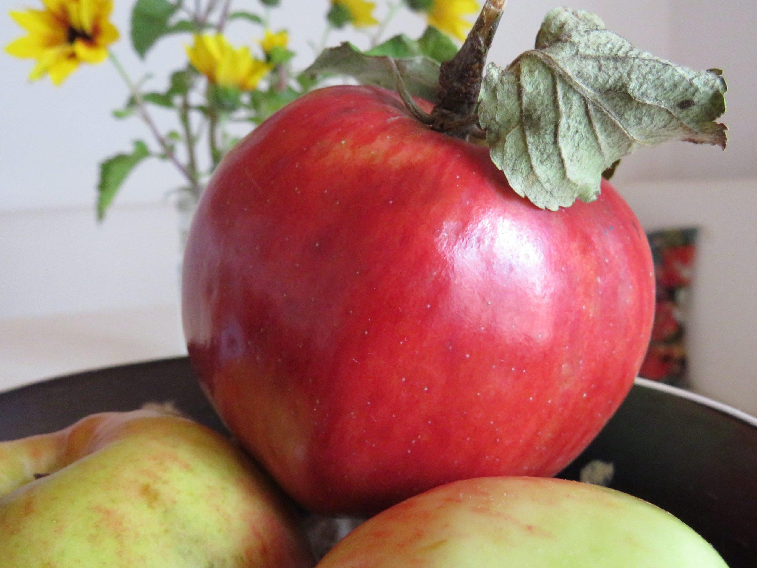 Herrlich: Frische Äpfel für den gesunden Obstkorb