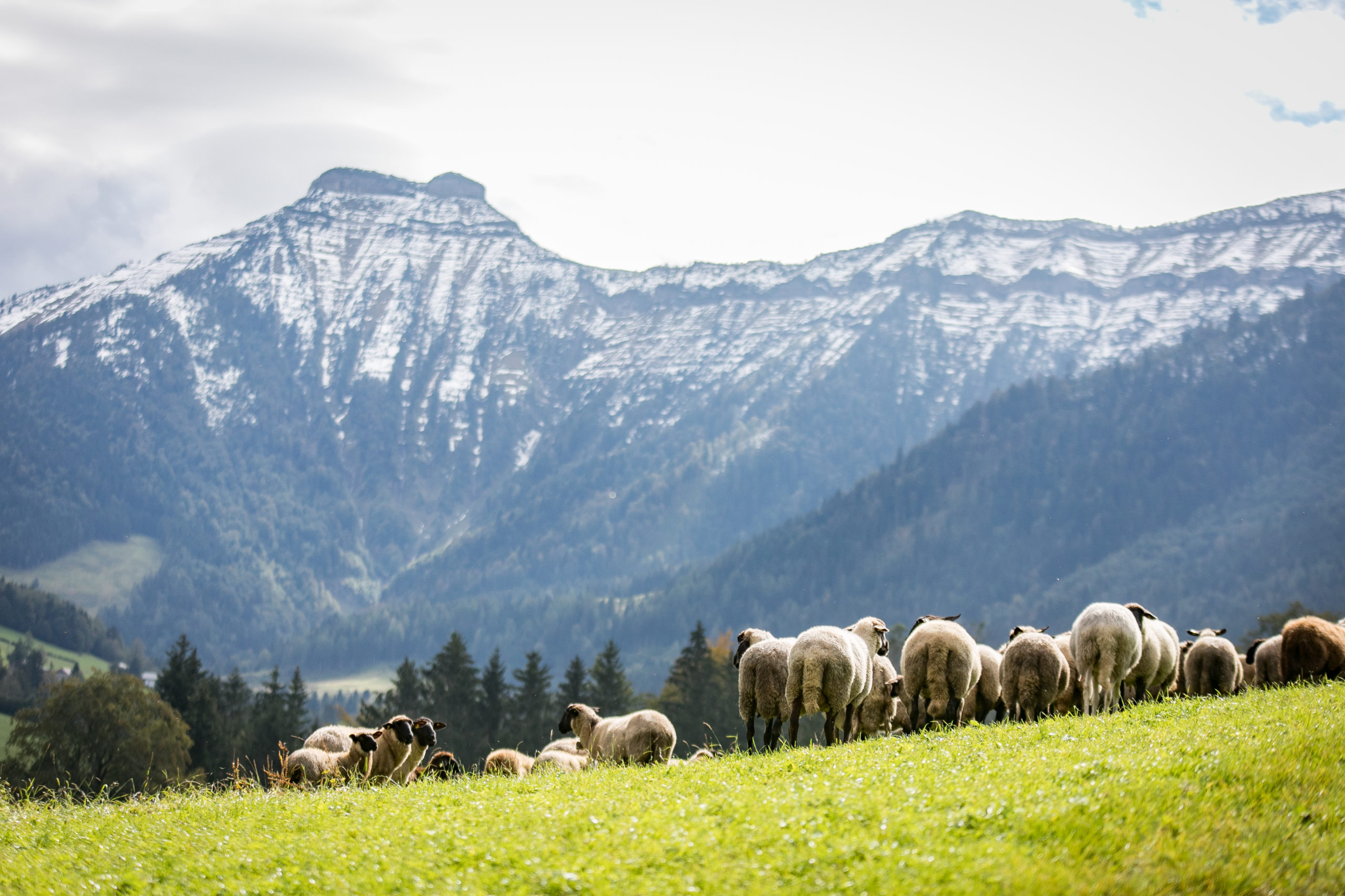Johannes Weißenbacher, Unterkrispl ,  Salzburg, © www.wildbild.at