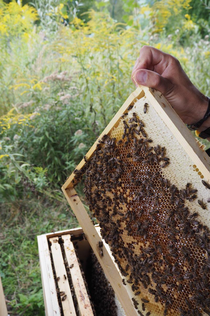 Bienenstreicheln bei Bienenlieb