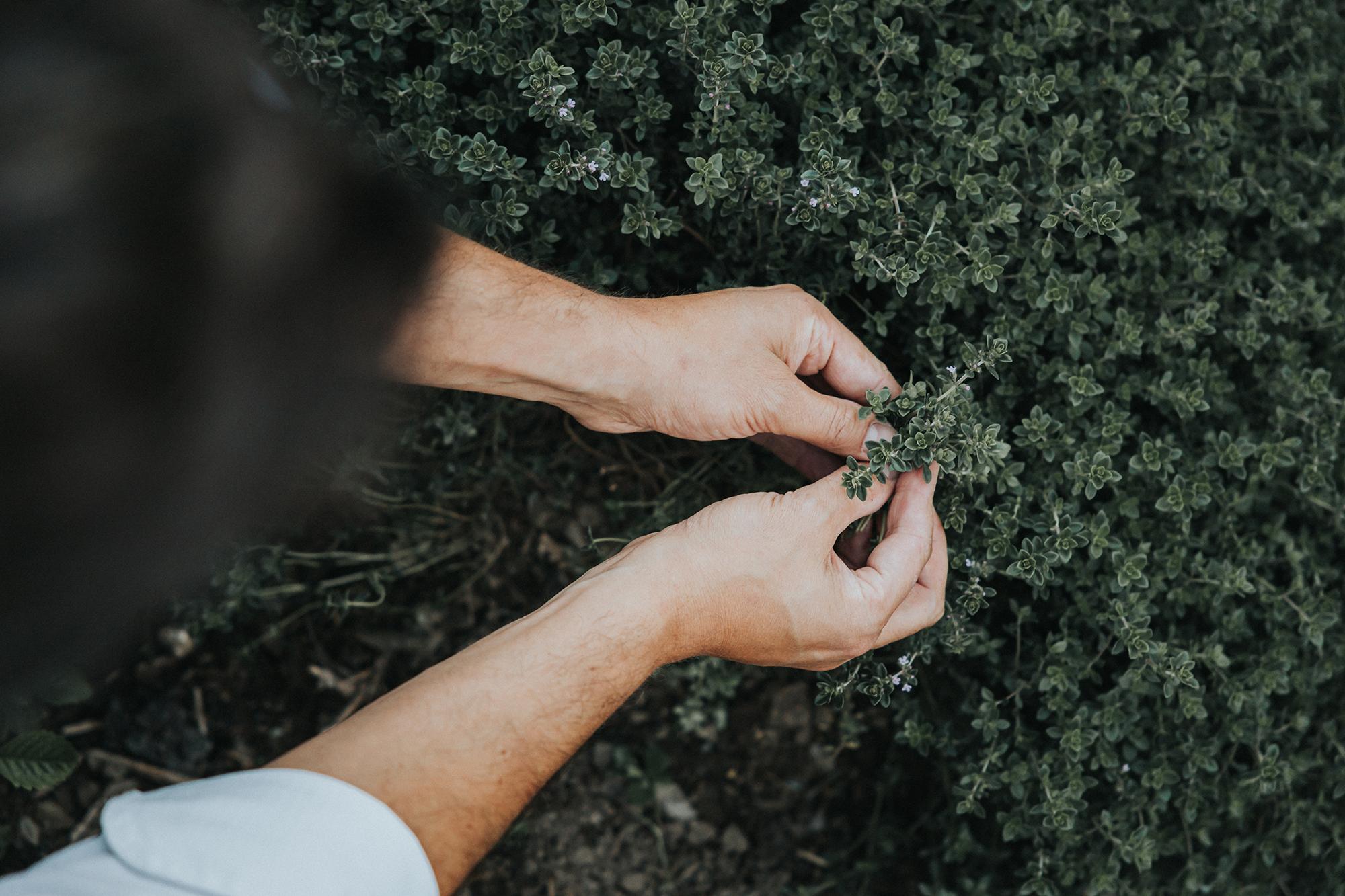 Frisches aus dem Kräutergarten © Zuparino / Niko Zuparic