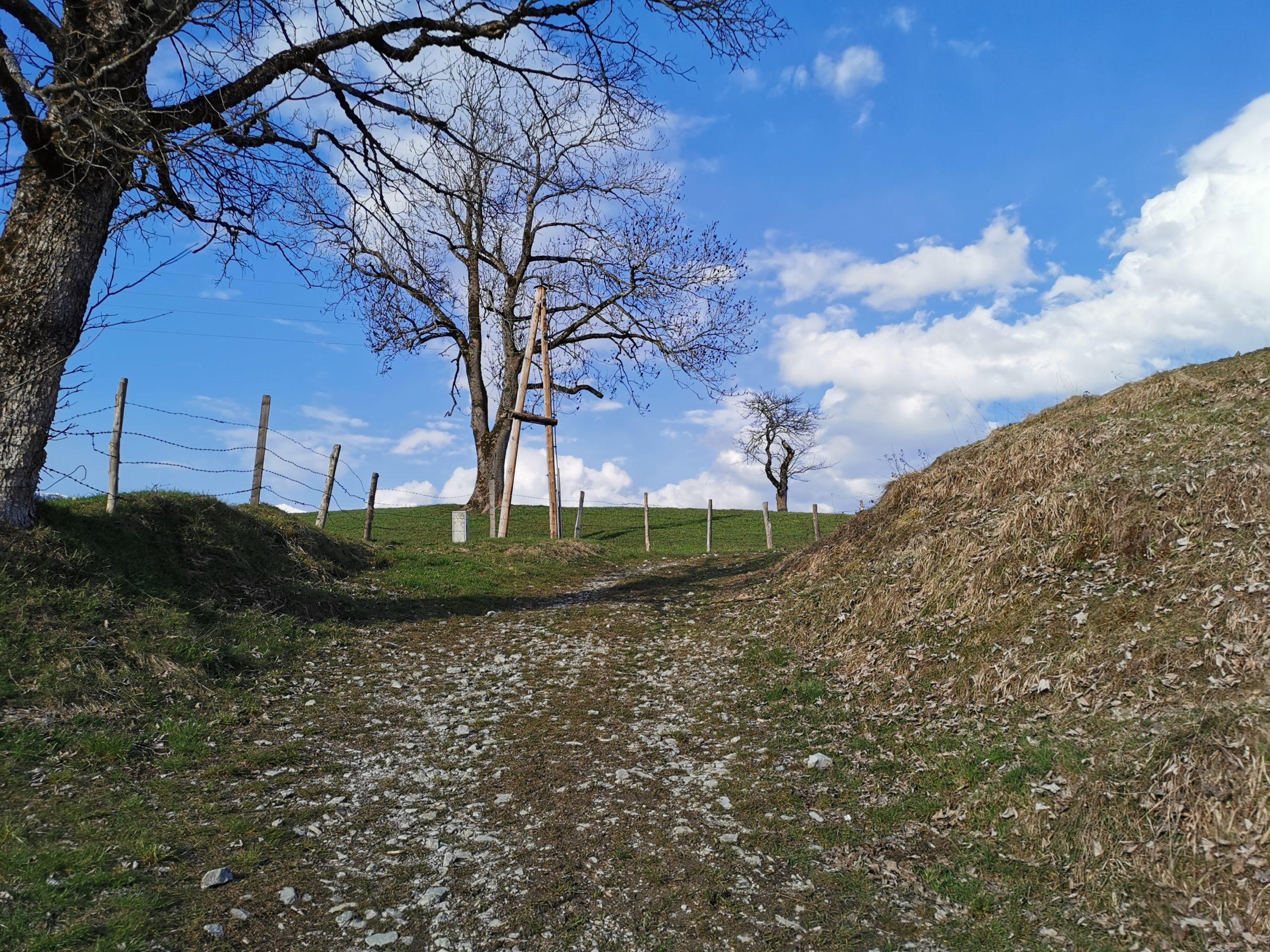 Die liebliche Landschaft von St. Koloman genießen - Taugler Mundartkreuzweg © AlmSinn Martina Egger