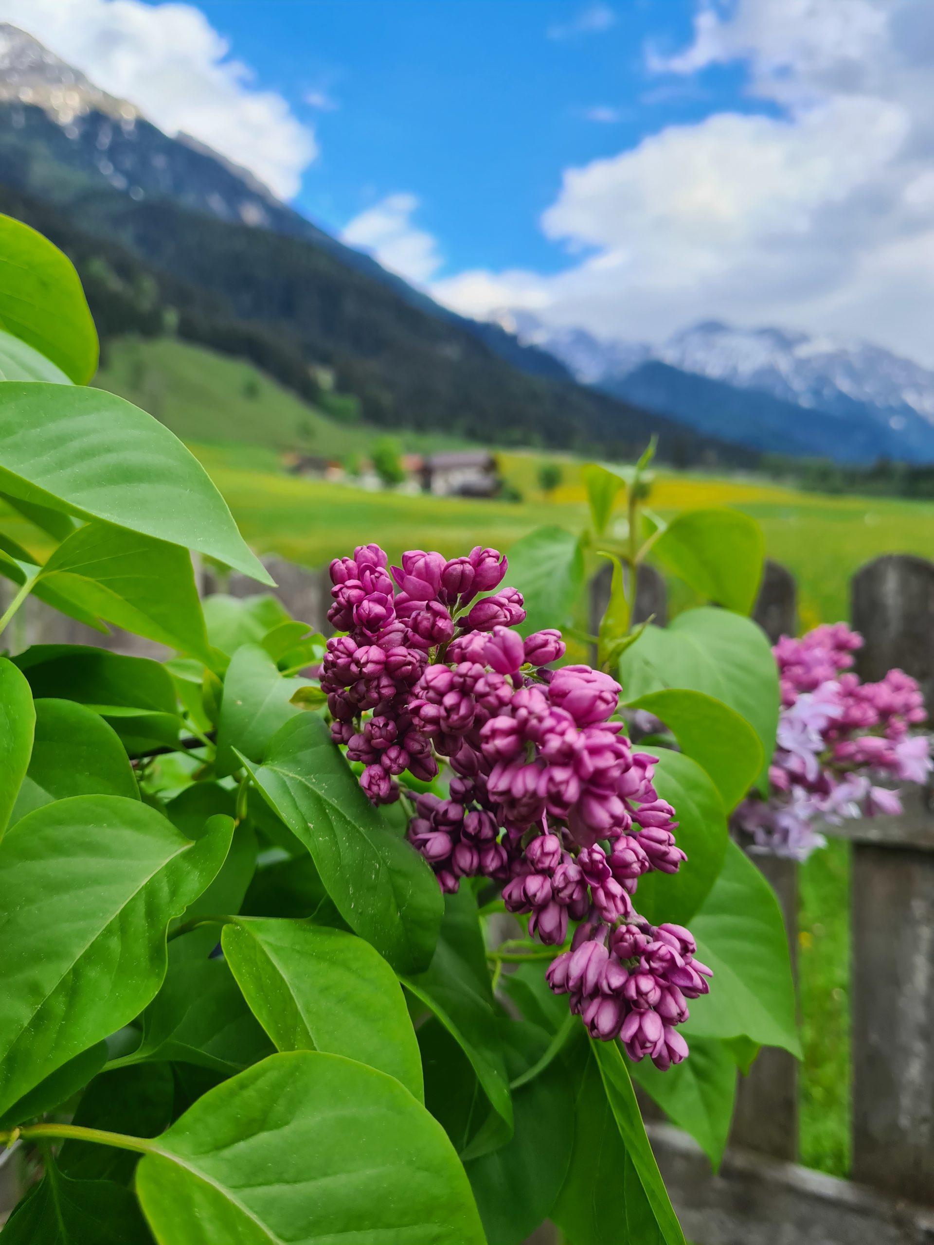 Blüte © Belina Huttegger