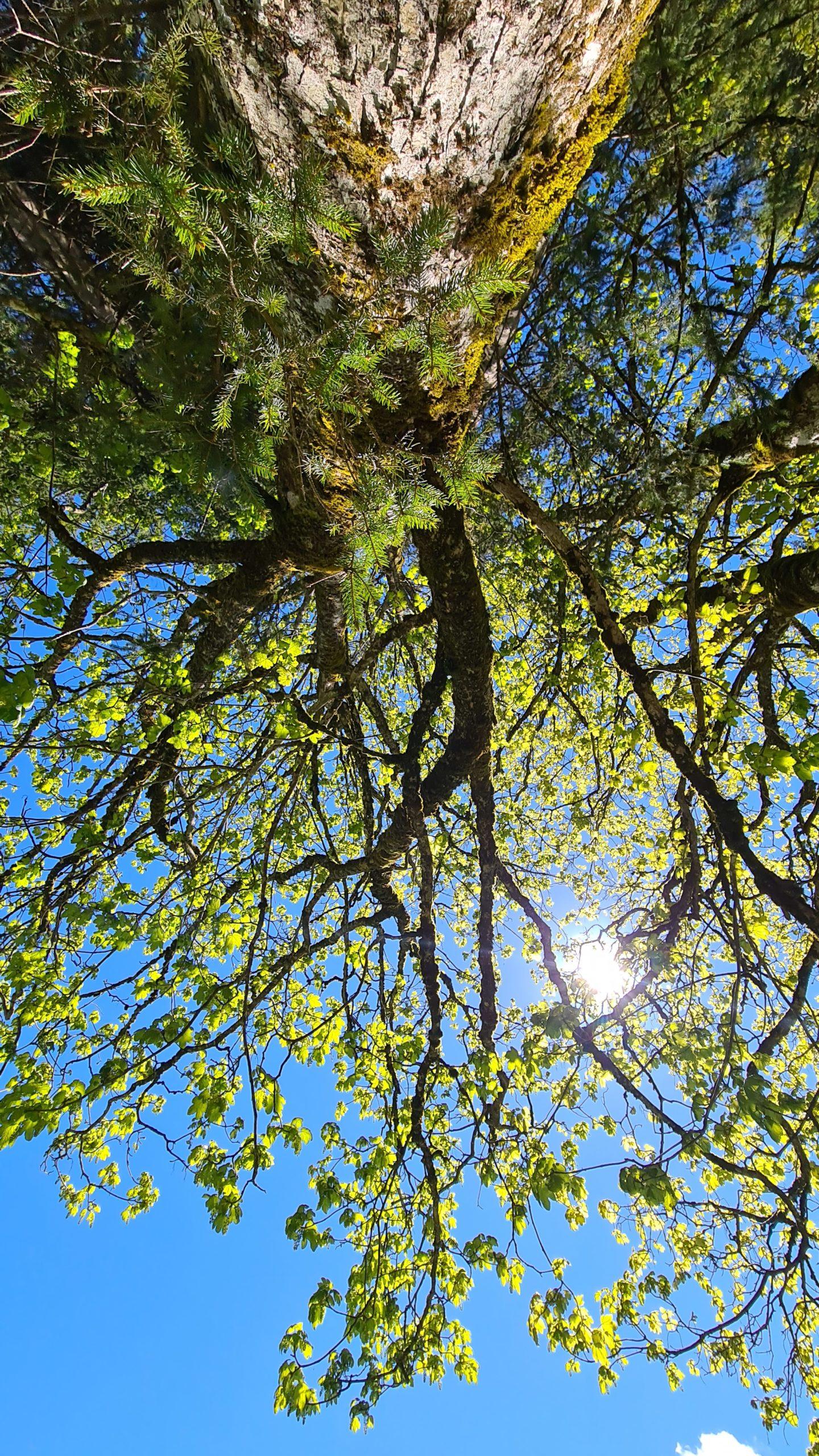 Baumkrone aus Vogelperspektive © Belina Huttegger